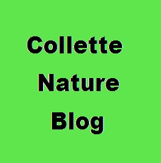 collettenatureblog